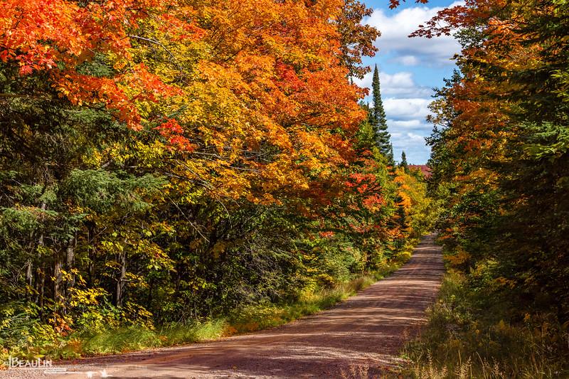 Sawtooth Range Forest