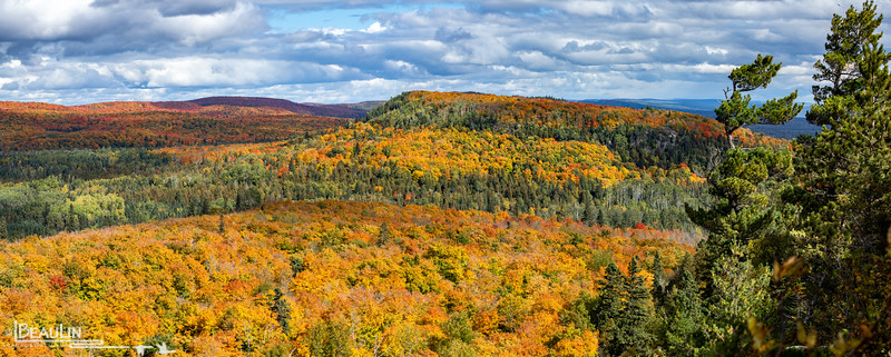 Oberg Mountain Maples II