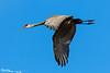 Gliding Crane