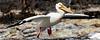 Jumbo Jet - Bird Style