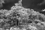 Black & White Infrared Experimentography II