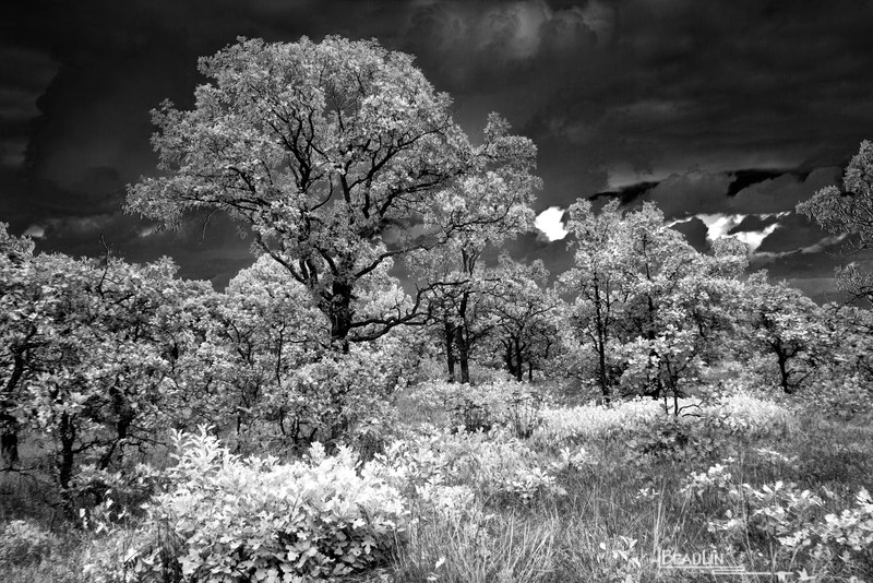 Black & White Infrared Experimentography