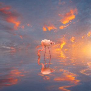 Flamant Rose et Sunset - Web