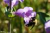 Calling All Bumblebees III