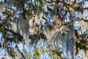 Bromeliad Art