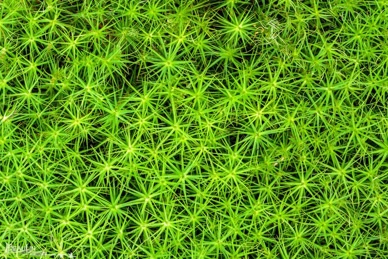 Bryophyte Pincushion