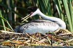 Defending the nest