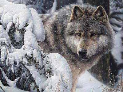 Uten ulven blir norge et fattigere land! -- by eva karin nordgård