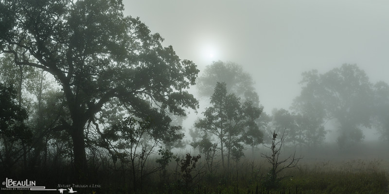 Foggy Morning Savanna