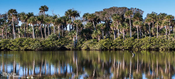 Coastal Estuary Mangrove estuary and scrub habitat at Merritt Island National Wildlife Refuge, Titusville, Florida.