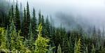 Alpine Mist
