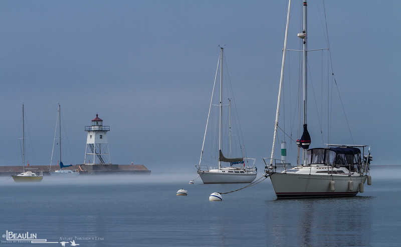Misty Morning Harbor