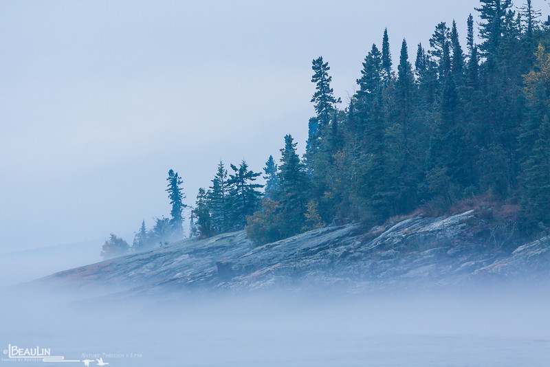 Foggy Shoreline