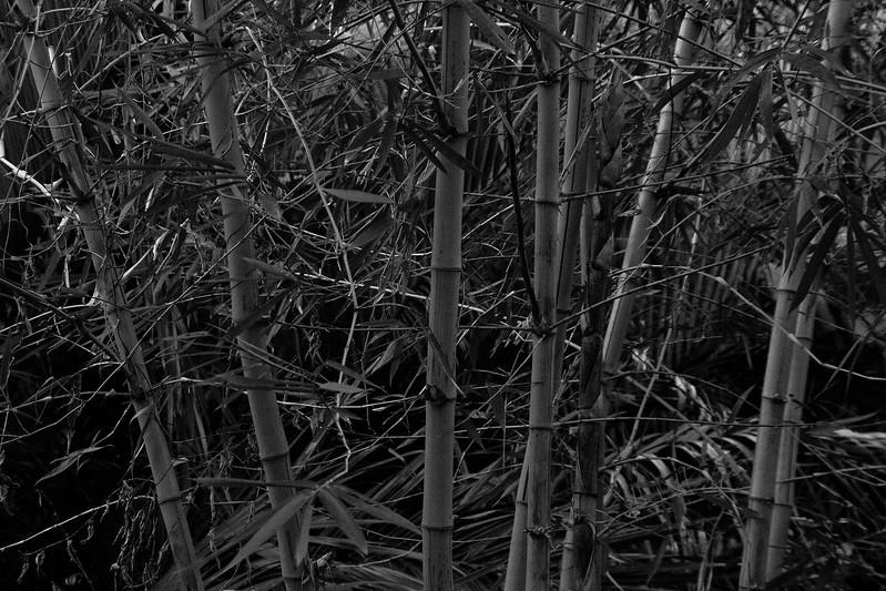 Bamboo, Mekong River
