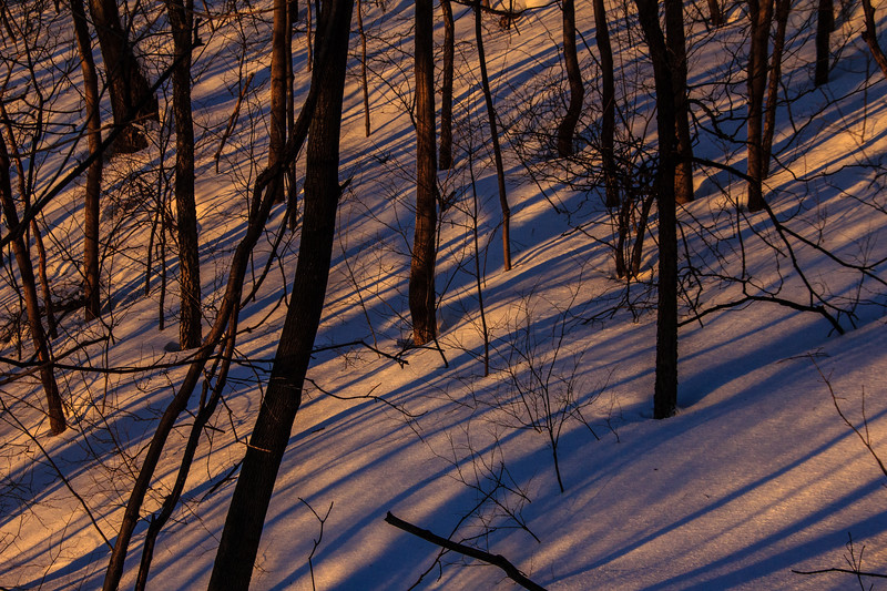 Winter Evening, Mont Royal