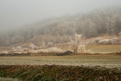borzapozsar_1020077.jpg