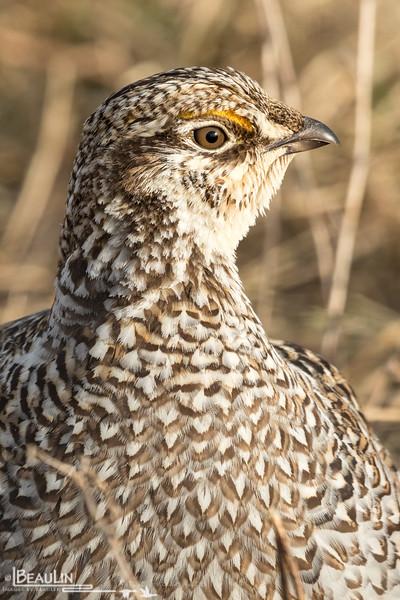 Firebird Portrait II