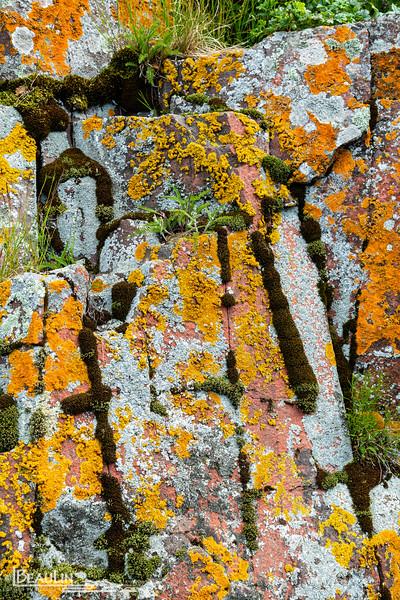 Encrusted Basalt