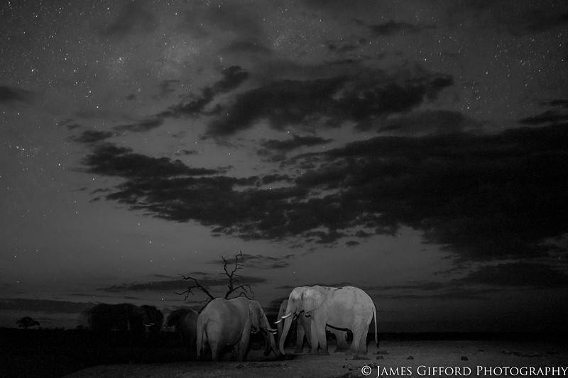 At the height of the dry season in Savute, Botswana, the bull elephants are forced to rely upon pumped waterholes often queuing 24 hours a day to drink at this specific one.  I have spent many nights spread over several years, shooting in both twilight and pitch darkness from the ground, trying to capture the perfect photograph of them under the stars and have always been amazed at how silently they wander past me, uninterested in my presence. This time, I wanted to capture the stars against a more colourful backdrop so waited until some time after sunset until the drinking elephants had created an interesting composition before pressing the shutter, using an off-camera flash to highlight the closest ones.