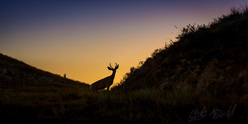 Buck at Sunset, 2013