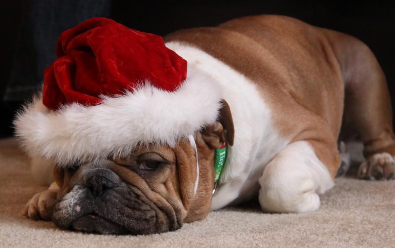 Ho Ho Ho...Merry Christmas.....