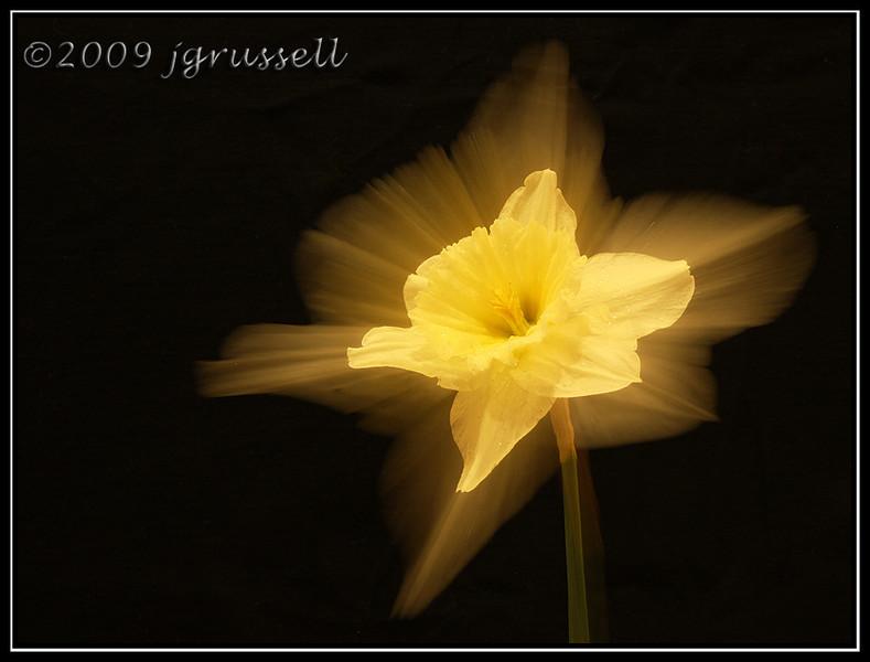 Zoom flower 2
