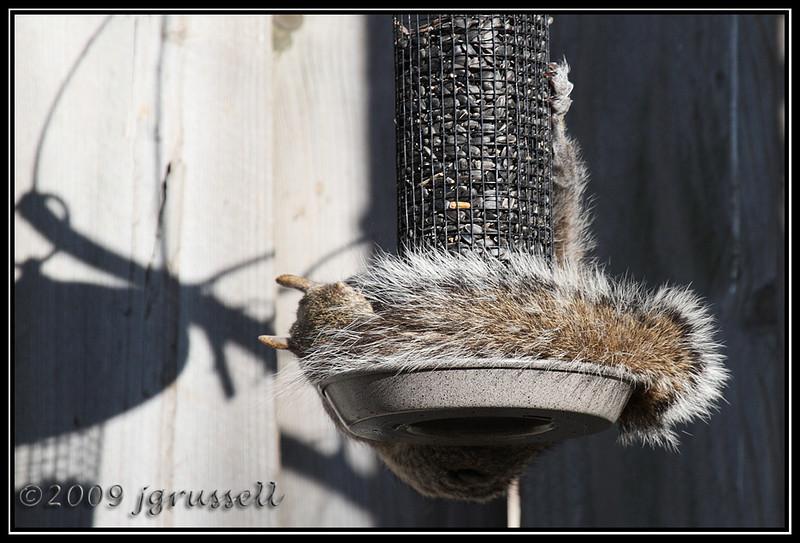 Greedy little bugger...