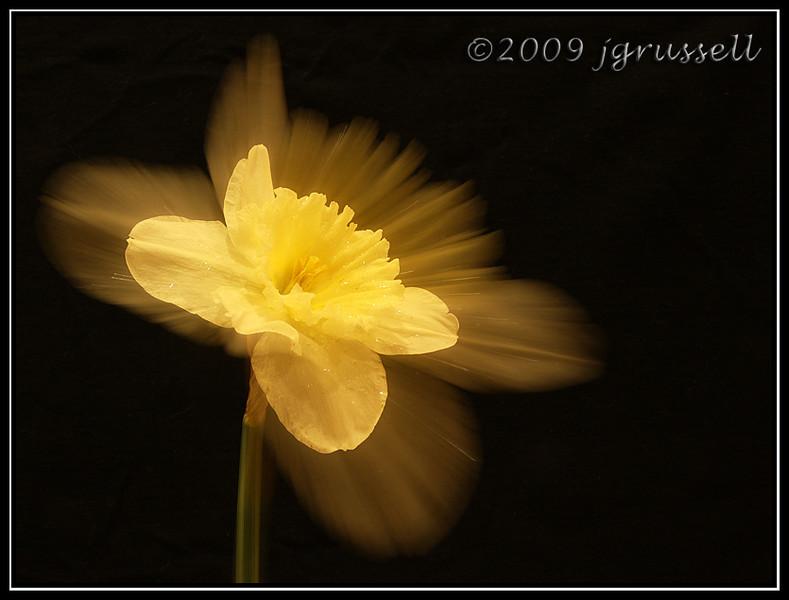 Zoom flower 1