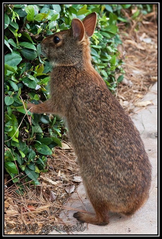 Thumper?