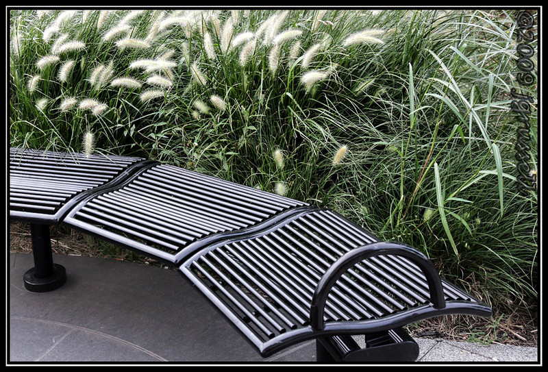 City bench and grasses