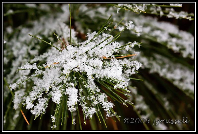 Flaky pine