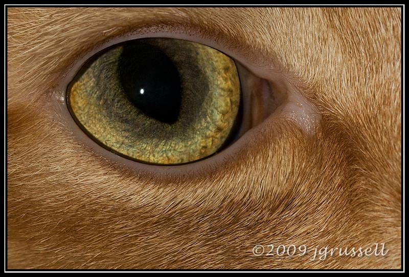 Cat's eye (Clancy)