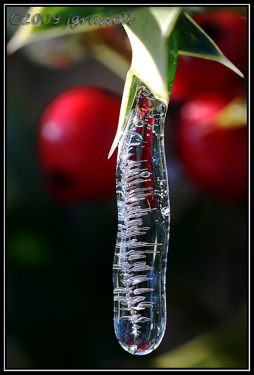 Holly ice drop 5