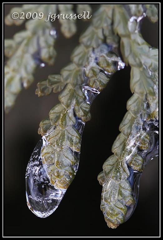 Evergreen ice drops