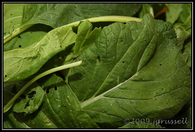 Vitamin greens <br /> (a/k/a Vitaminna)
