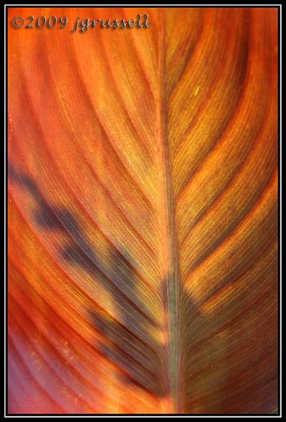 Leafy shadow