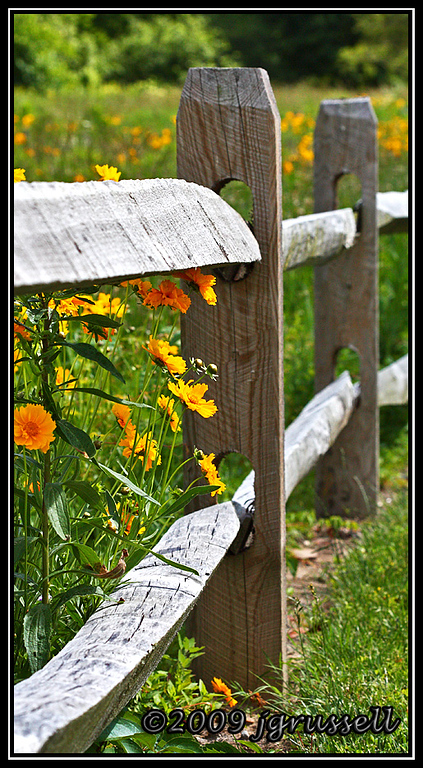 Wildflowers and fence<br /> Norfolk Botanical Gardens
