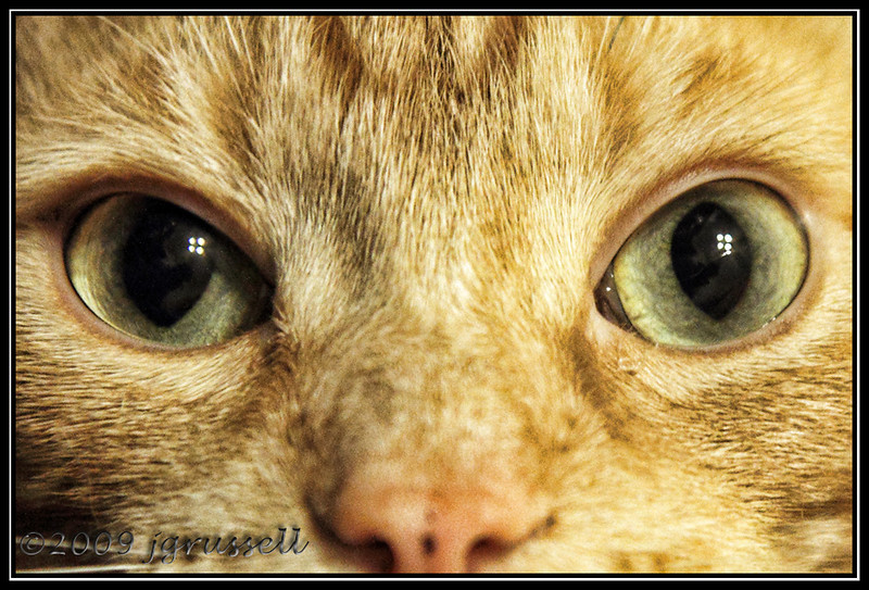 Eyes of cat