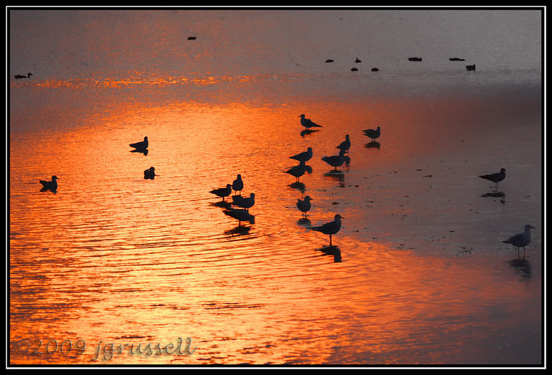 Sunset, seagulls and mudflats