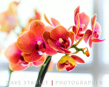 "Thursday 10 July 2014: WINDOW SILL  Today's topic....""On the window sill."" These beautiful orchids were on my friend Enrique's sill, as a memento to his mother who just recently passed. He permitted me to photograph them, and hopefully...even if the orchids don't last forever, this photo will allow him to remember them at their finest. My sincerest sympathies for you and your family buddy!"