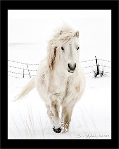 Pony - Park City, UT.