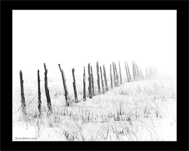 Fence in the fog. February 13, 2012.