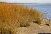 November 14 - Teddy Roosevelt Beach, Oyster Bay