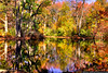 October 30 - Fall colors at the Nassau County Museum of Art.