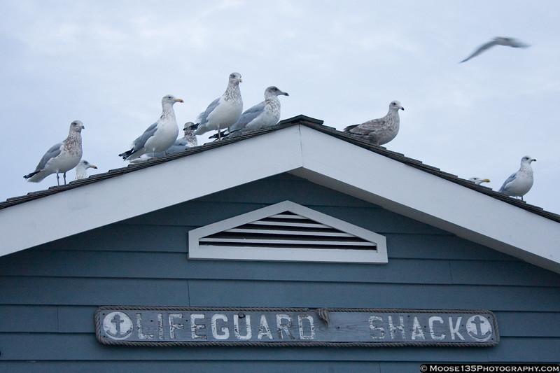 January 1 - On guard at Jones Beach. Happy New Year!