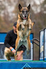 November 12 - A different kind of flying - dock dogs in action at the Rural Hill Sheep Dog Trials and Dog Festival.