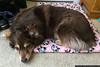 April 19 - Denali on her favorite blanket.