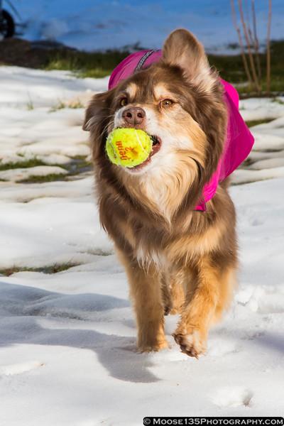 January 19 - Having fun in the snow!