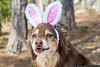 April 1 - Denali wishes everyone a Happy Easter!