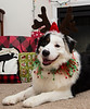 December 24 - It's Jake, the Christmas Aussie!